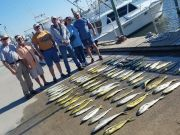 Phideaux Fishing Outer Banks Charters, Dolphin Grass