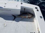 Phideaux Fishing, 109 lb. yellow fin