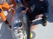 Phideaux Fishing, Ride along tuna fishing with us, thanks sam