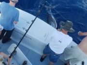 Phideaux Fishing, BLUE MARLIN and MAHI