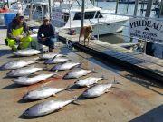 Phideaux Fishing, YELLOW FIN, YELLOW FIN