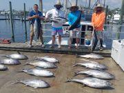 Phideaux Fishing, Procter rules