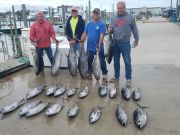 Phideaux Fishing, Tuna fishing continues