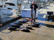 Phideaux Fishing, 70 pound yellow fin