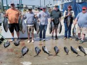 Phideaux Fishing, Great yellow fin fishing!!  There is a black fin in there too