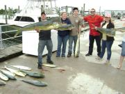 Phideaux Fishing Outer Banks Charters, dolphin are here